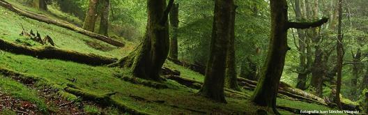 20140407125108-bosque-onis.jpg