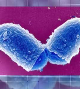20150609114223-bacteria-difteria.jpg