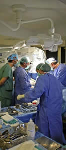 20110105121157-trasplante01.jpg