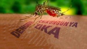 20160209120050-vector-mosquito-zyka.jpg